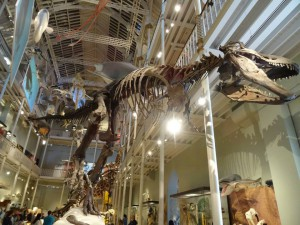 It was surprisingly hard to take a decent photo of the T-Rex skeleton. There was always something obstructing the view...