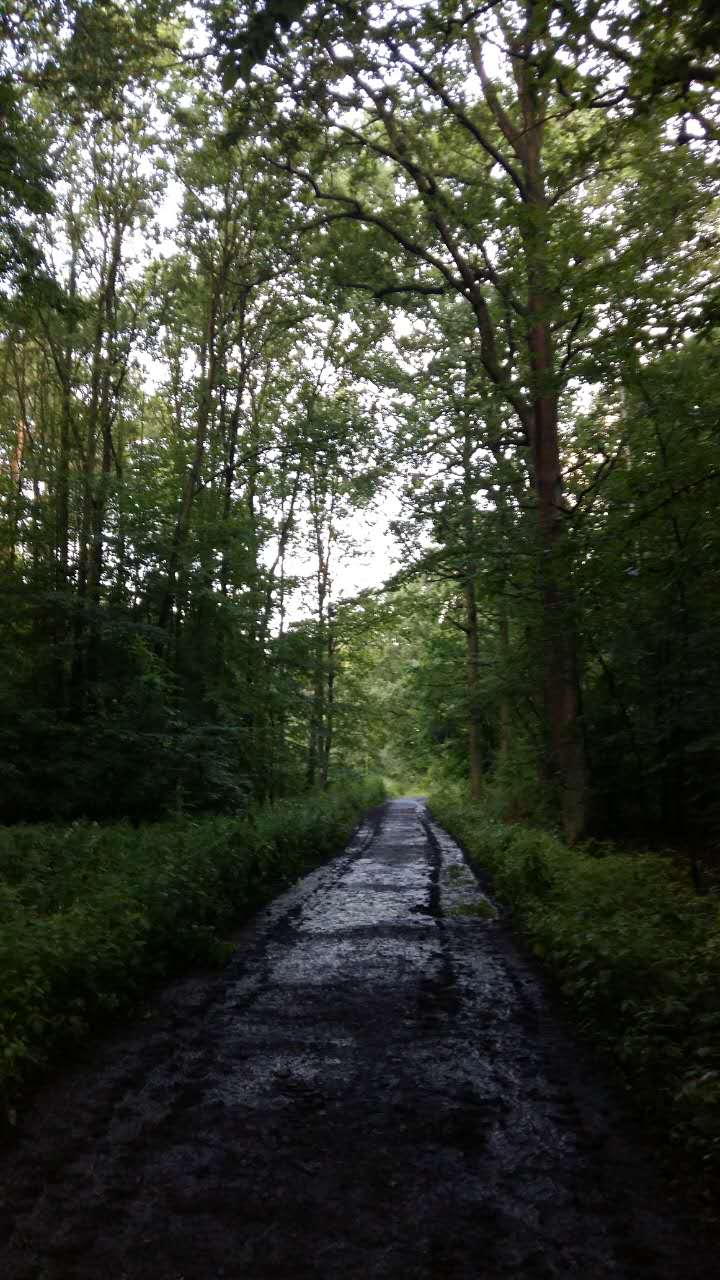 Forest Road, take me to the Summer of HPC…